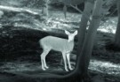 Deer thermal image thumbnail