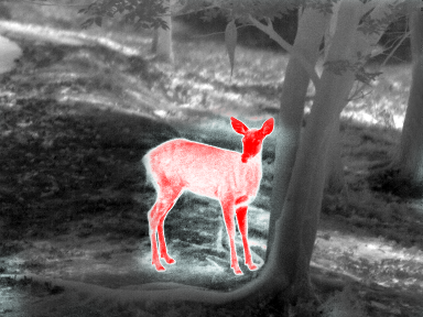 Deer thermal image